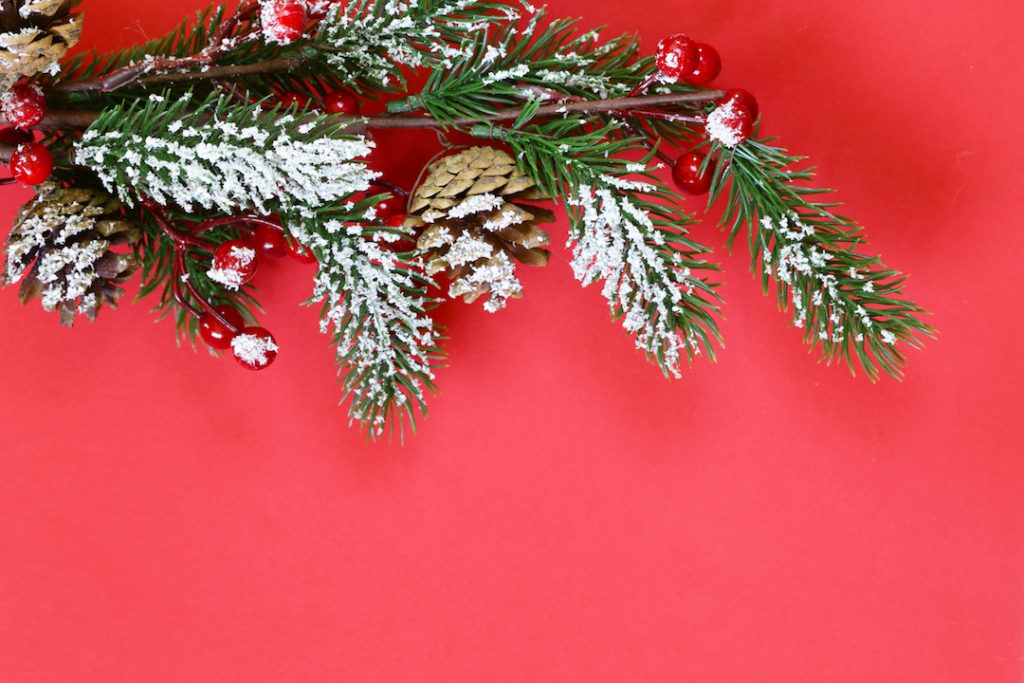Christmas tree branch | Featured image for Cash Rate Remains on Hold for Christmas blog